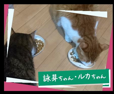 30日間試食レポート 愛猫版 | ...